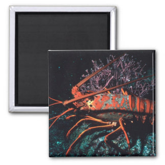 Lobster Crawling 2 Inch Square Magnet