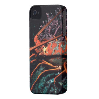 Lobster Crawling Case-Mate iPhone 4 Case
