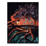 Lobster Crawling Postcard