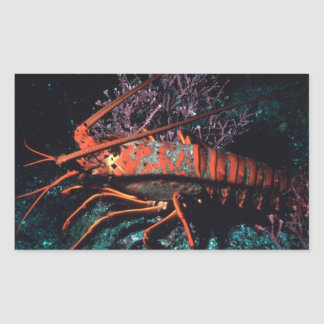 Lobster Crawling Rectangular Stickers