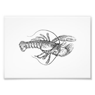 Lobster Illustration Photo Print