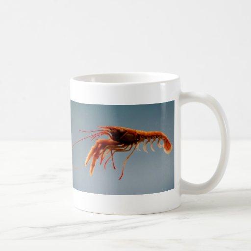 Lobsterette atractivo taza
