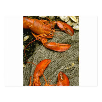 Lobsters Postcard