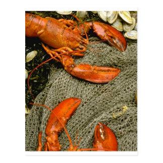 Lobsters Postcards