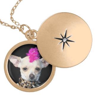 Locket punky del final del oro de la chihuahua collares personalizados