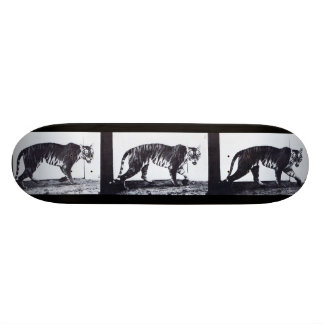 LOCO MOTION Skateboard: Tigress Walking Skateboard