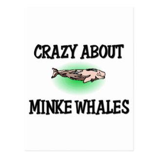 Loco por ballenas pequeñas tarjeta postal