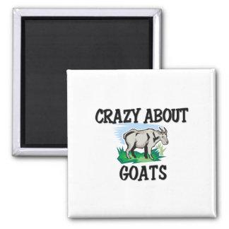 Loco por cabras imán cuadrado