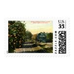 Locomotive in California Orange Grove Vintage Postage Stamp