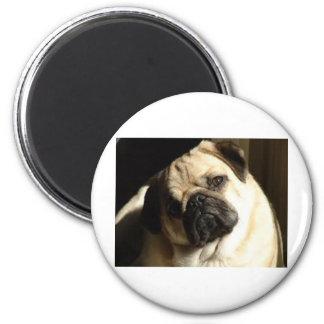 Locura del perrito imán redondo 5 cm