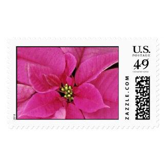 Locura rosada timbre postal