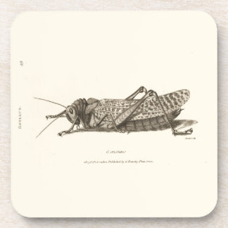 Locust print drink coaster