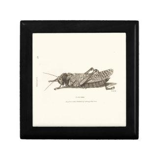 Locust print gift box