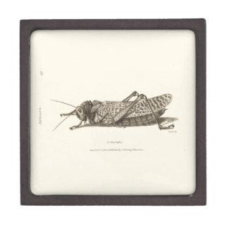 Locust print premium gift box