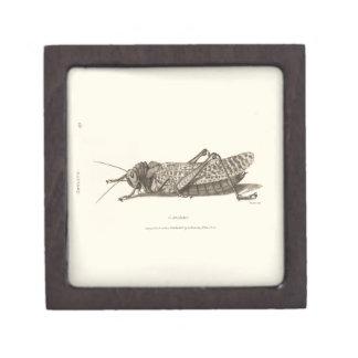 Locust print premium keepsake box
