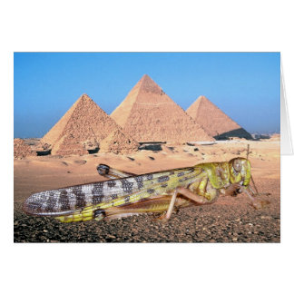 Locust & Pyramids In Egypt Card