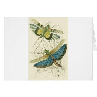 Locusta Cristata (lower), Locusta flava (upper) Card