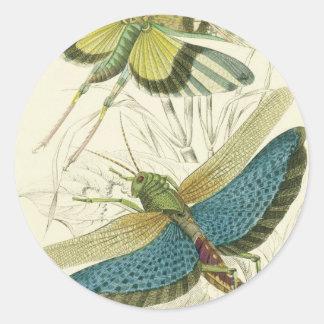 Locusta Cristata (lower), Locusta flava (upper) Classic Round Sticker