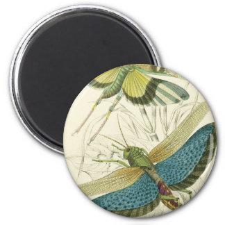 Locusta Cristata (lower), Locusta flava (upper) Magnet