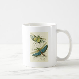 Locusta Cristata más bajo flava del Locusta su Tazas