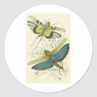 Locusta Cristata más bajo flava del Locusta su Etiqueta Redonda