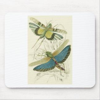 Locusta Cristata (más bajo), flava del Locusta (su Tapete De Raton