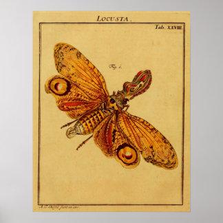 Locusta Poster