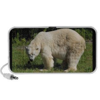 locutor scowling del oso polar altavoz de viaje