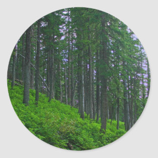 Lodge pole forest classic round sticker