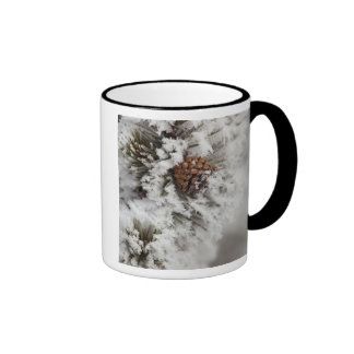 Lodgepole Pine cone in winter in Yellowstone Coffee Mugs