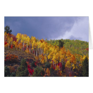 Logan Canyon in Utah in autumn with passing Card