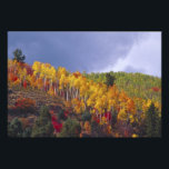 "Logan Canyon in Utah in autumn with passing Photo Print<br><div class=""desc"">Logan Canyon in Utah in autumn with passing storm � Julie Eggers / DanitaDelimont.com</div>"