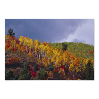 Logan Canyon in Utah in autumn with passing Poster