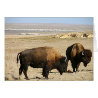 Logan County Bison Greeting Cards