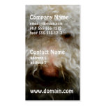 Logato Romagnolo Dog Business Cards