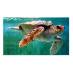 Loggerhead #2 Mini Print Double-Sided Standard Business Cards (Pack Of 100)