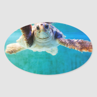 Loggerhead #4 Sticker