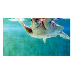 Loggerhead #5 Mini Print Double-Sided Standard Business Cards (Pack Of 100)