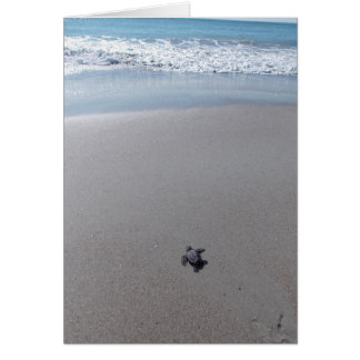 Loggerhead Rescue Card