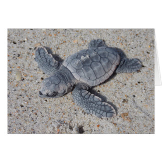 Loggerhead Rescue II Card