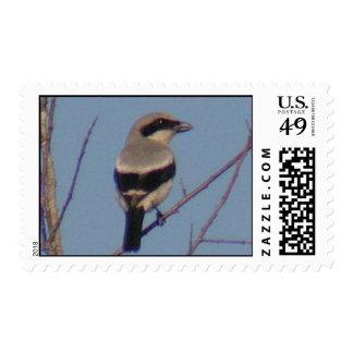 Loggerhead Shrike Bird Postage Stamp