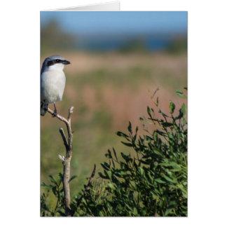 Loggerhead Shrike Greeting Card