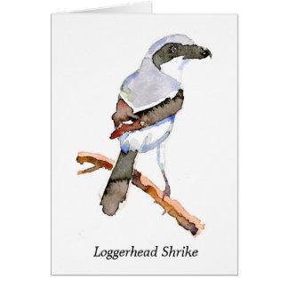 Loggerhead Shrike Card