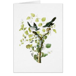 Loggerhead Shrike John Audubon Birds of America Card