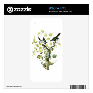 Loggerhead Shrike John Audubon Birds of America Decal For iPhone 4