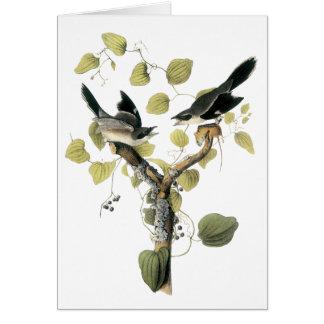 Loggerhead Shrike, John Audubon Card