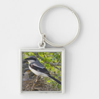 Loggerhead Shrike Lanius ludovicianus) adult Keychain