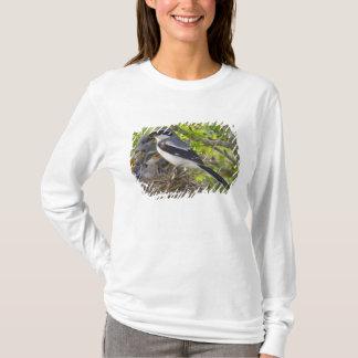 Loggerhead Shrike Lanius ludovicianus) adult T-Shirt
