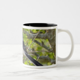 Loggerhead Shrike Lanius ludovicianus) adult Two-Tone Coffee Mug