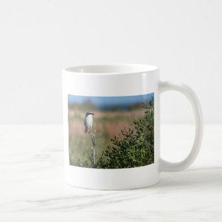Loggerhead Shrike Mugs